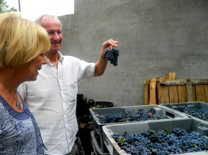 Inspecting the wine harvest on a gourmet weekend in Madrid
