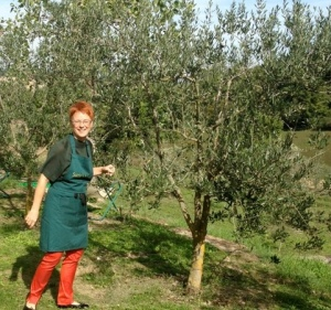 Suzie, our Italian gourmet tour hostess, working in olive groves