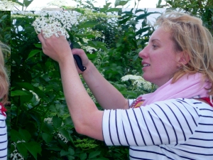 Alexandra collecting elderflowers