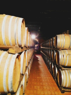 In the cellars- Tuscany tour 2012