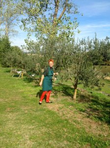 In the olive groves Tuscany Tour