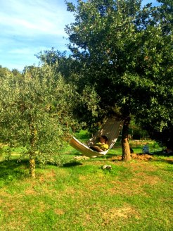 Tuscany Tour 2012- napping in the olive groves
