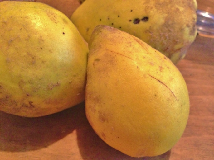 Freshly picked quinces