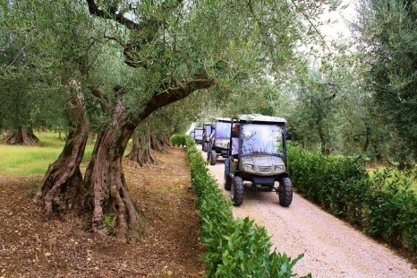 Exploring the estate on electric vehicles